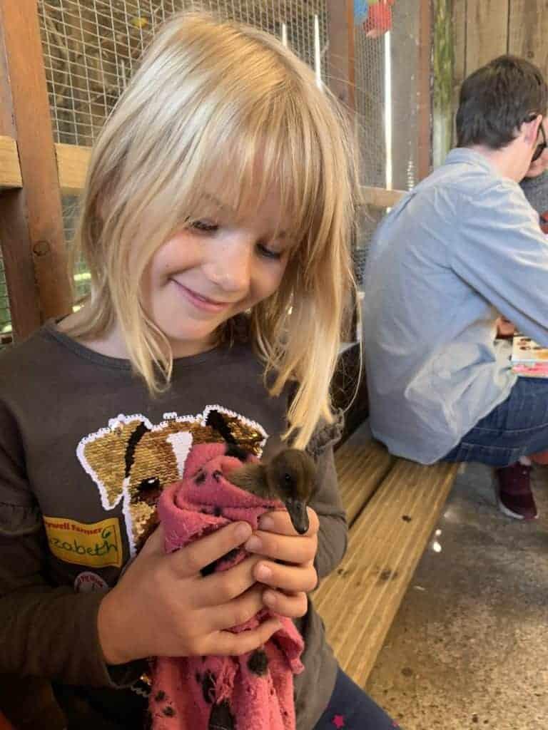 Girl cuddling duckling at Pennywell Farm