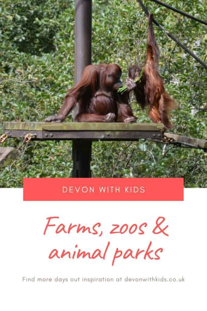 What's to do in Devon? LOTS! Here's a huge list of unmissable things to do in Devon with kids including farms, zoos and animal park days out. You'd be hard pressed to be bored! #Devon #England #UK #daysout #family #kids #thingstodo #attractions #castles #themeparks #swimming #zoo #park #NationalTrust #active #visit #places #trains