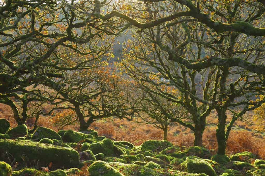 Wistman's Wood Dartmoor - outdoor activities in Devon