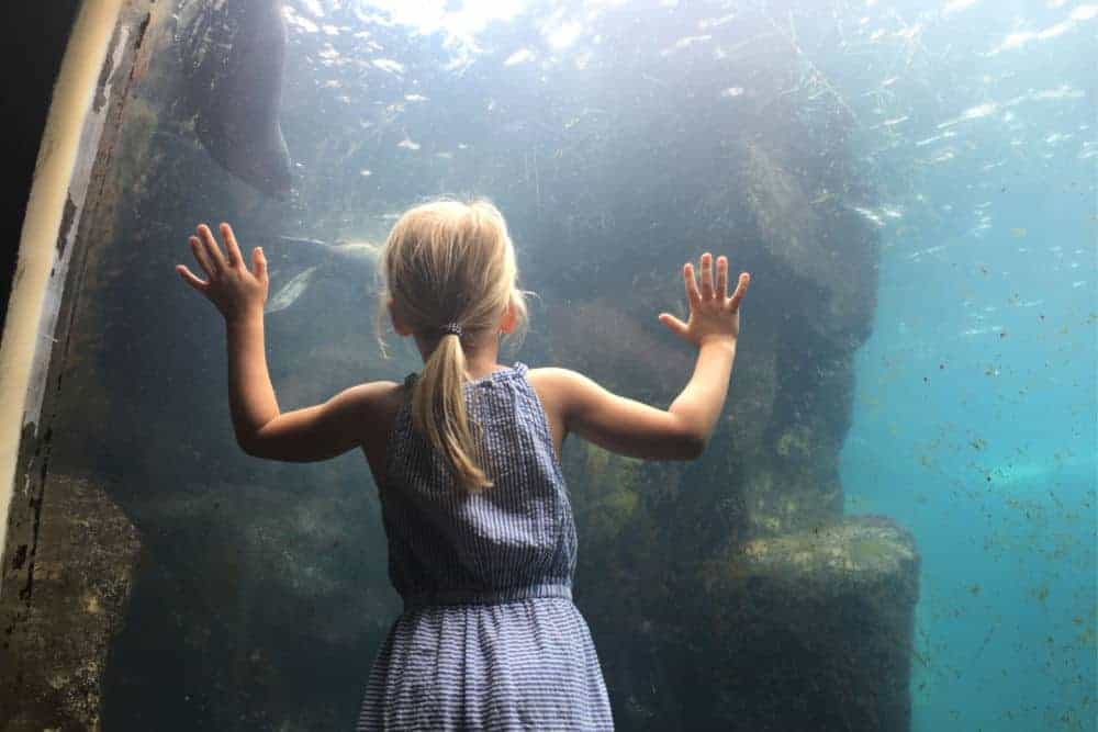 Child looking into seal tank at Living Coasts aquarium in Torquay, South Devon