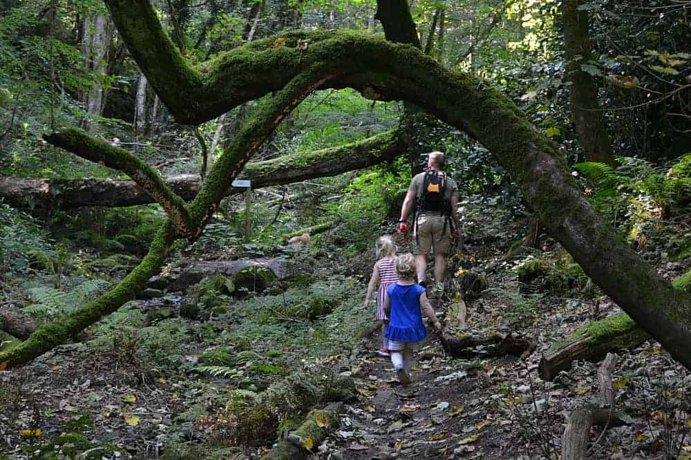 Family walking through the Fern Gardens at Canonteign Falls - a Dartmoor walk with kids