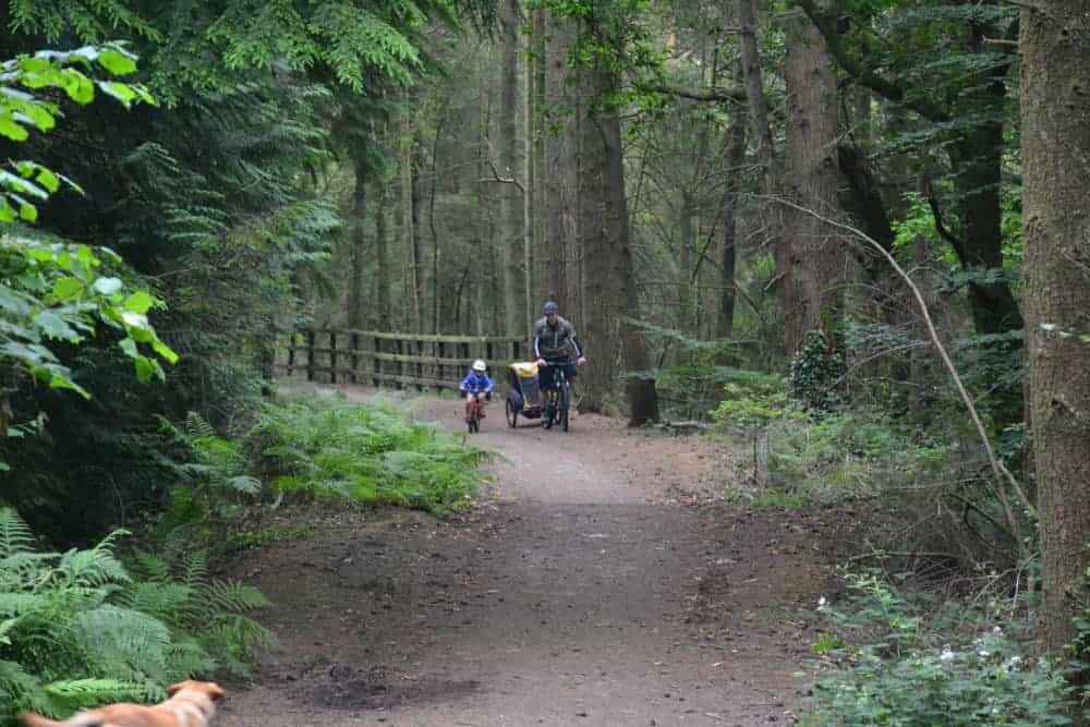 Cycling through the forest at Tamar Trails in Dartmoor