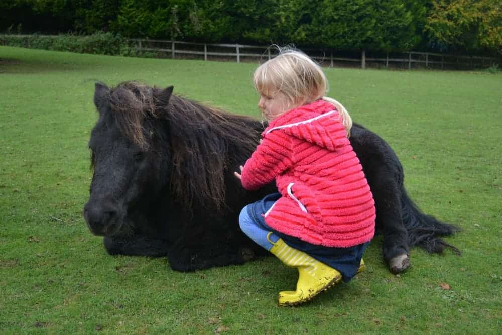Child petting pony in field at Dartmoor Miniature Pony Centre
