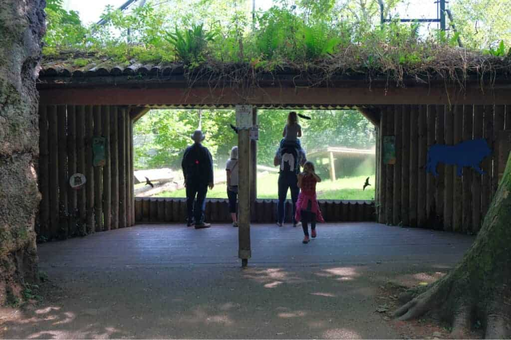 Viewing areas outside lion enclosure
