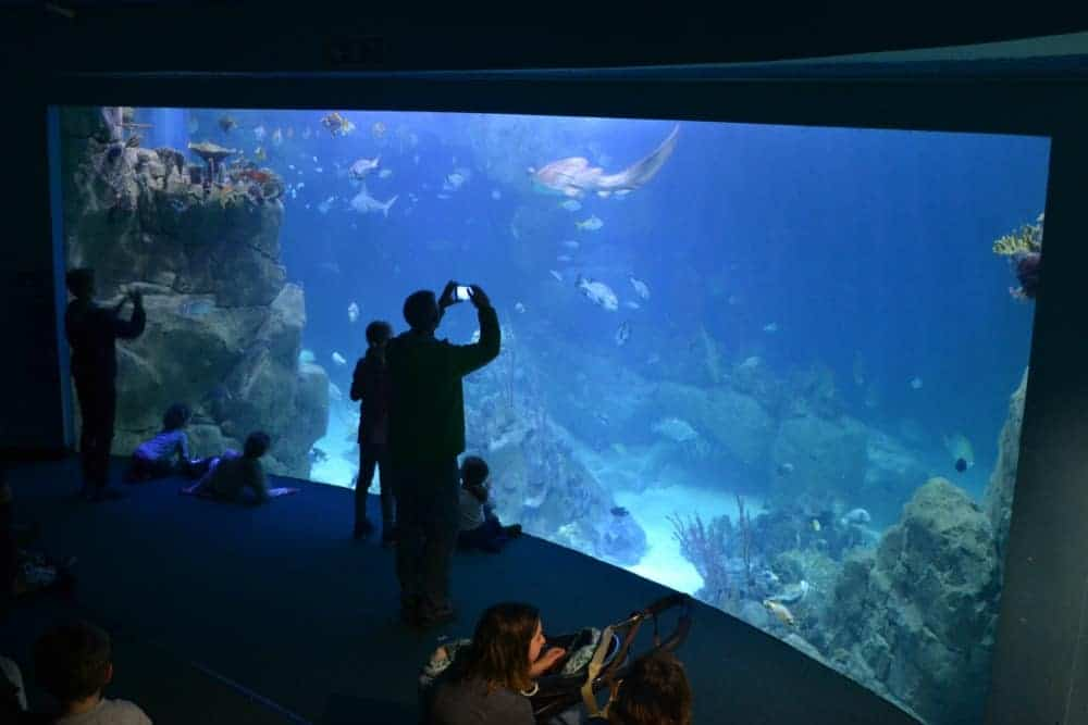 The Great Barrier Reef tank at the National Marine Aquarium in Plymouth, Devon
