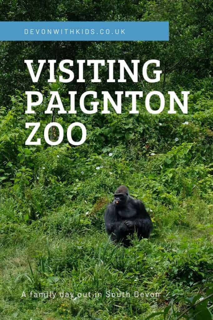 Looking for a really wild day out in the South West? Visit Paignton Zoo in South Devon to meet lions, lemus, rhinos & rheas. Here's all you need to know before you visit #DevonwithKids #zoo #Paignton #Devon #SouthWest #conservation #UK #England #daysout #thingstodo #wildlife #animals