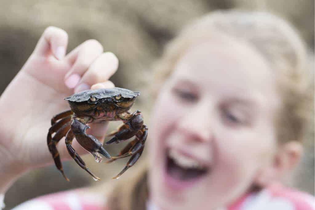 Girl crabbing in Devon