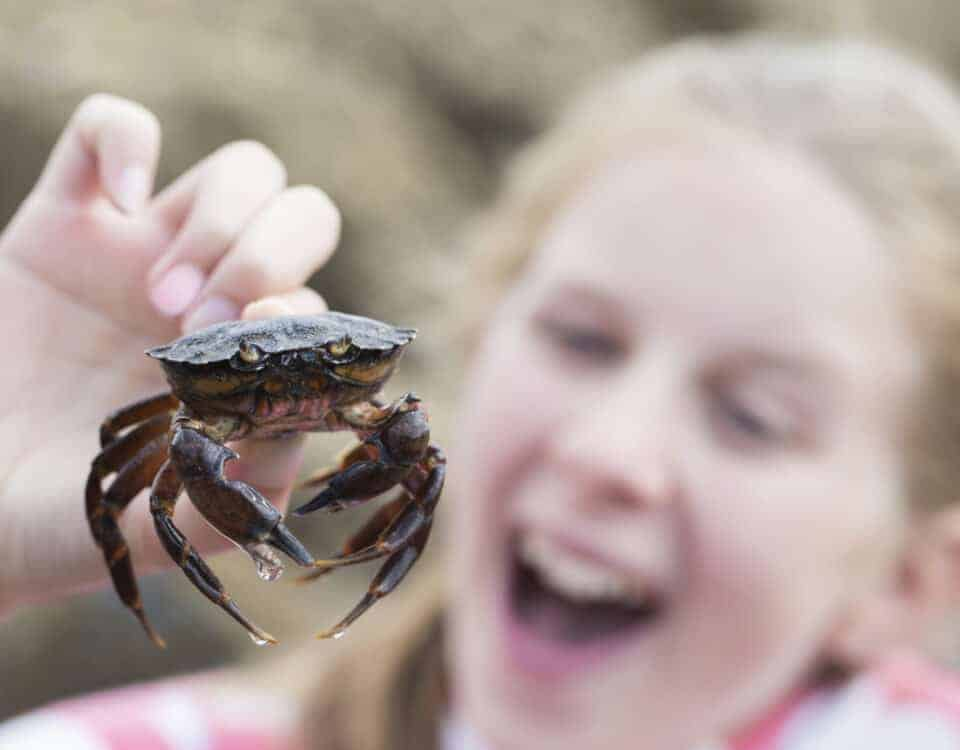 Girl crabbing in Devon