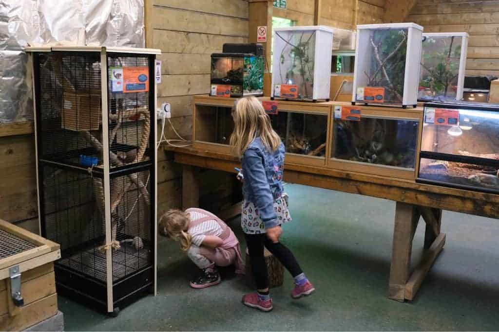 Children explore the Animal Discovery Zone at Becky Falls Devon