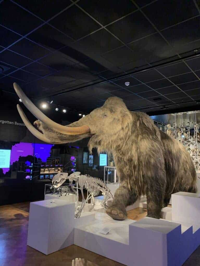 Wooly Mammoth at The Box Plymouth
