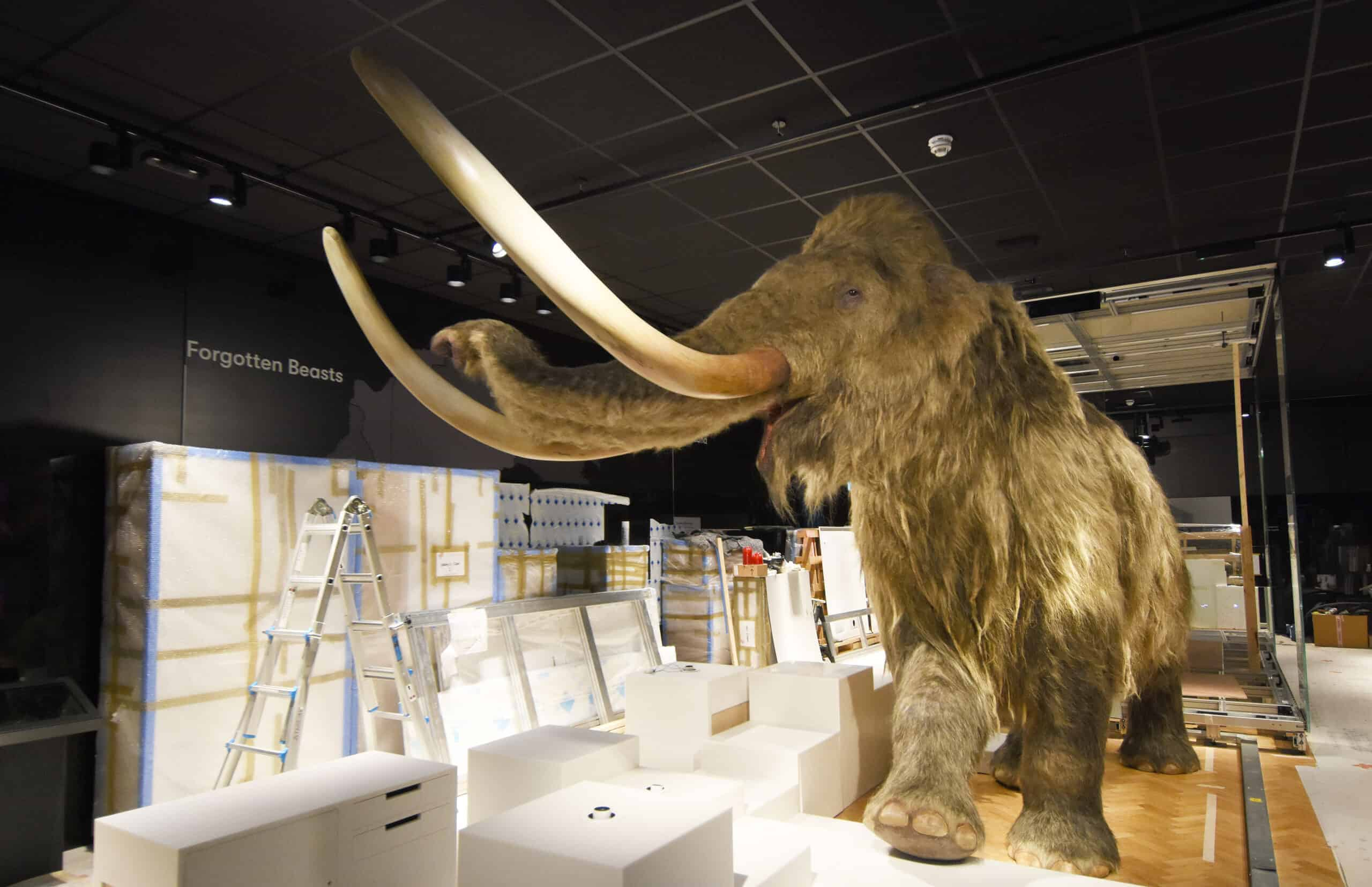 Wooly Mammoth at The Box - picture by Wayne Perry