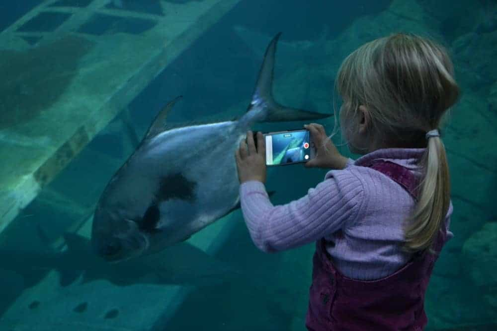 Child videoing fish swimming in tank at the National Marine Aquarium