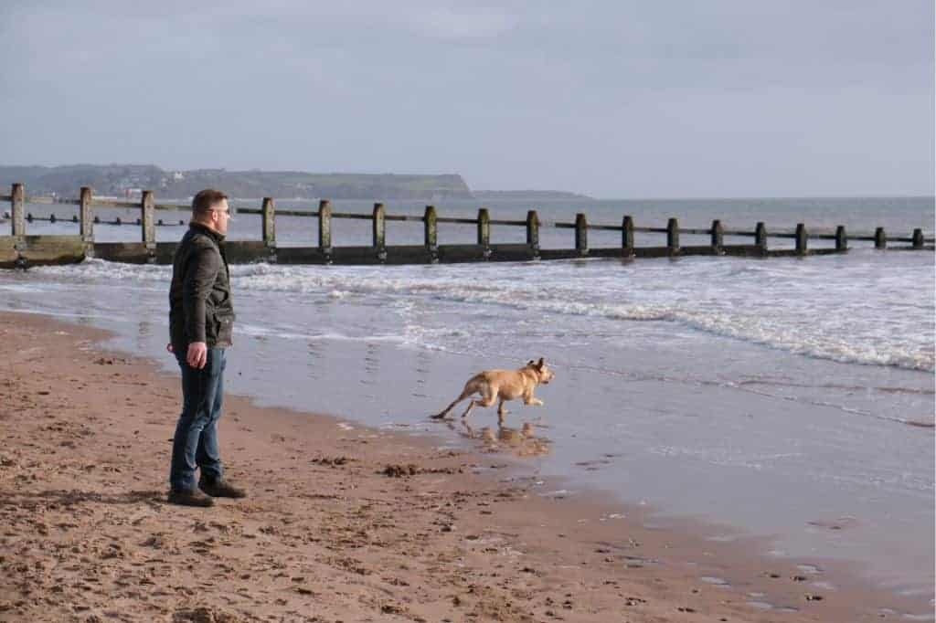 Dog on Dawlish Warren Beach