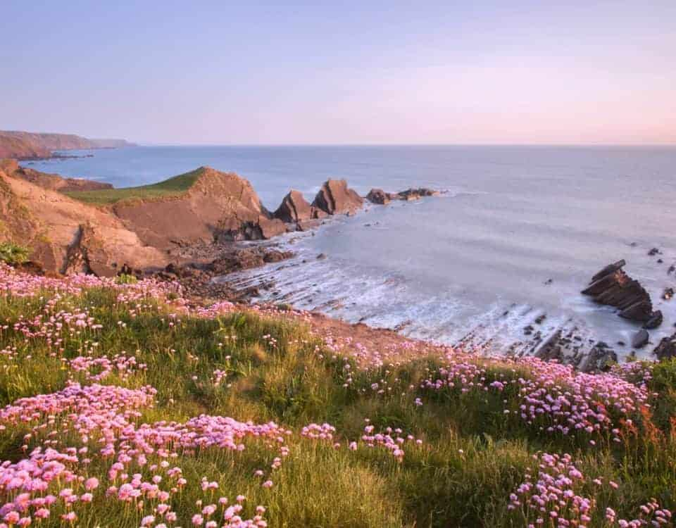 View of flowers at Hartland Point in Spring